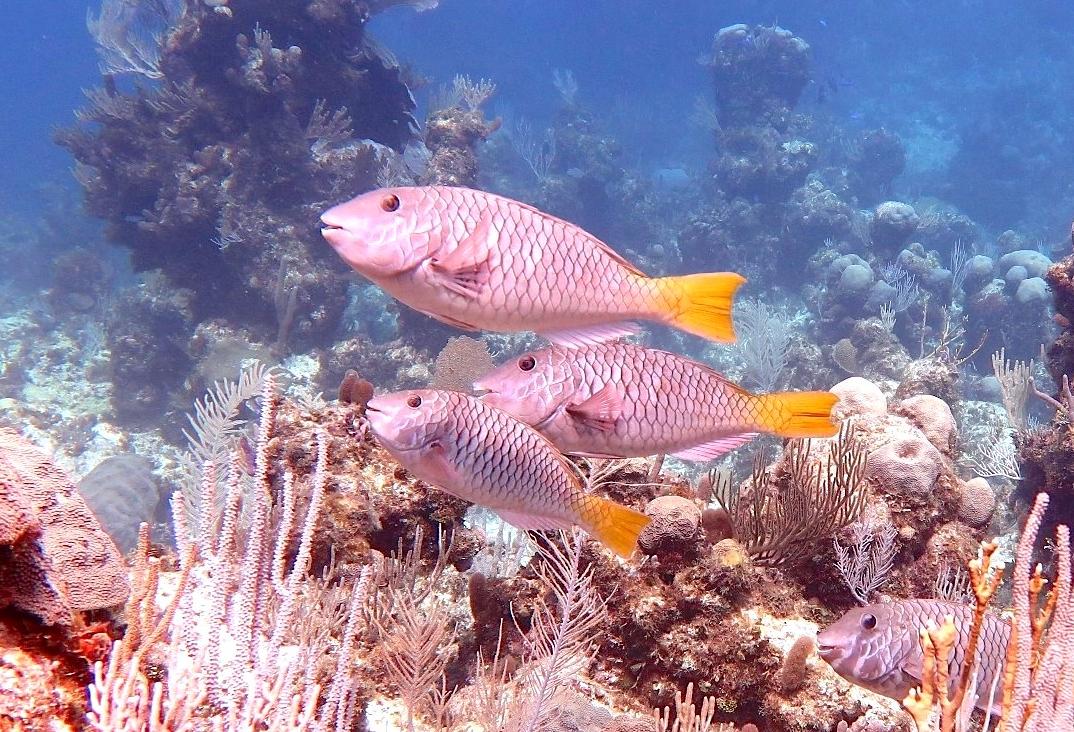 ThaiReeF Fish Index